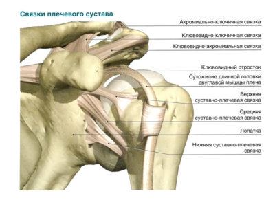 Импиджмент плечевого сустава сустав комфорт мг