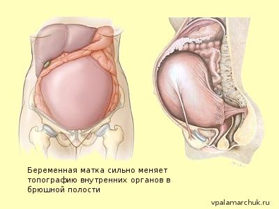 что происходит с кишечником при беременности